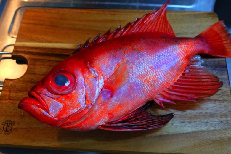 fishparty20160603